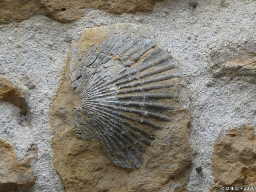 Fossile de coquille Saint-Jacques dans le mur d'une maison