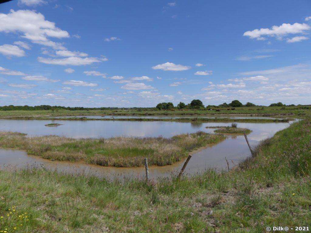Dans la Réserve naturelle nationale de Séné