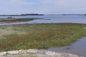 Les marais de Lasné et l'île Tascon au loin