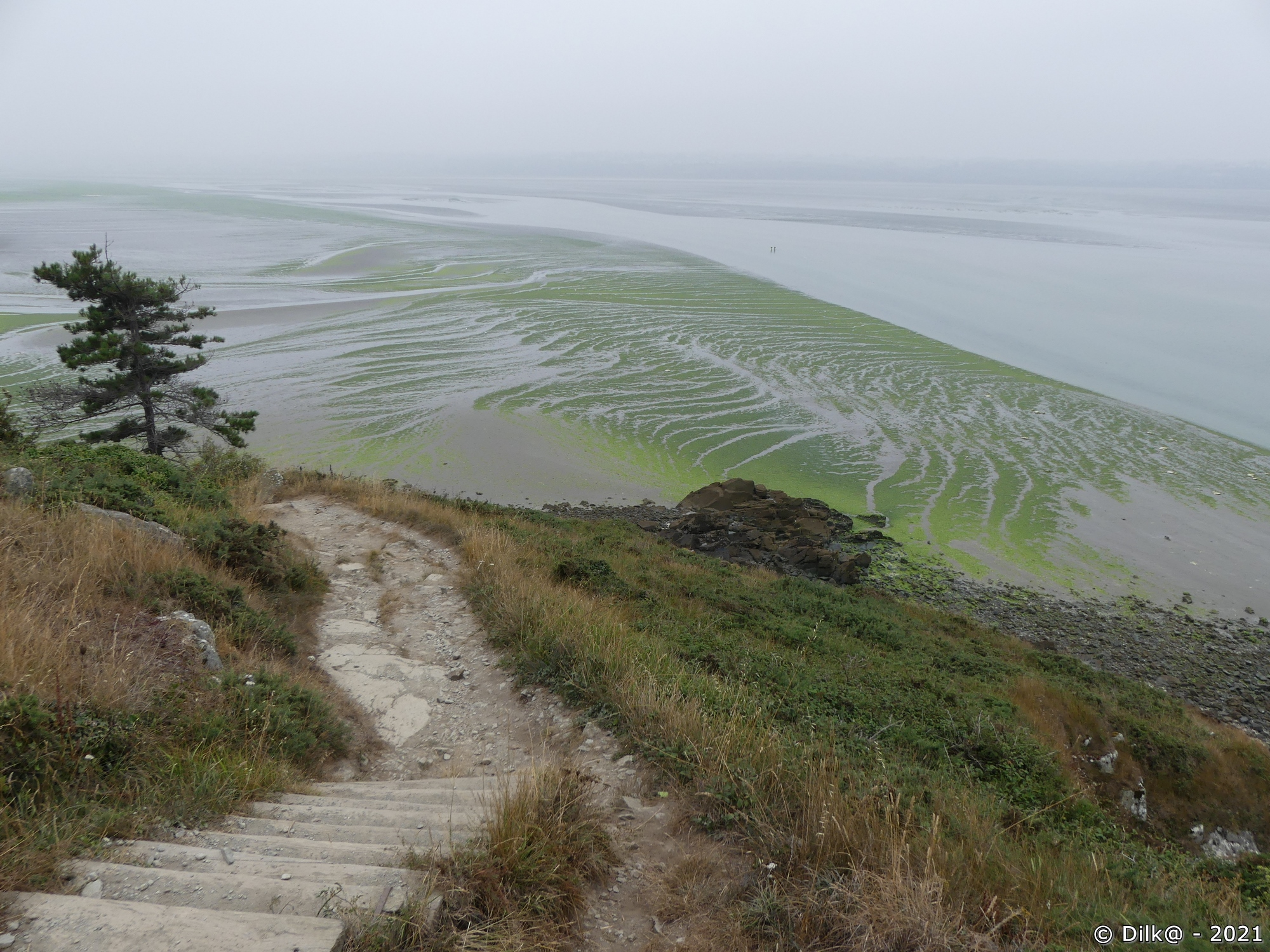 L'estran à la pointe du Grouin avec les algues vertes