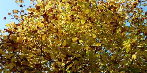 Dourdan en automne
