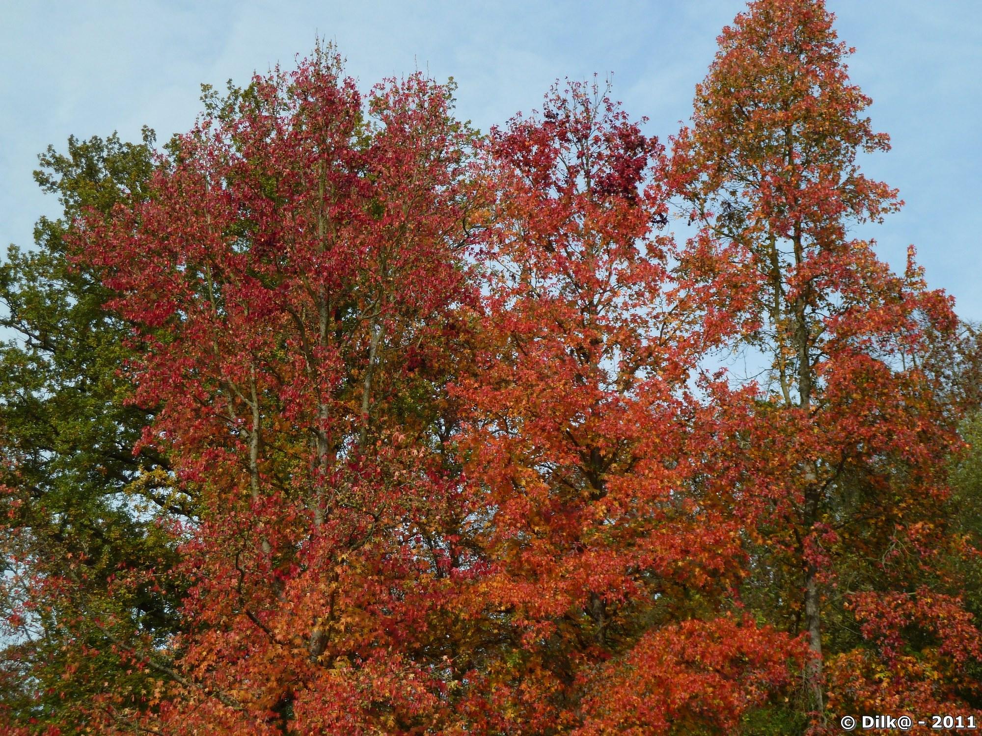 L'arbre aux couleurs rouge en automne