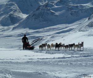 Passage des chiens de traîneaux avec le musher