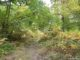La forêt de Malvoisine prend ses couleurs automnales
