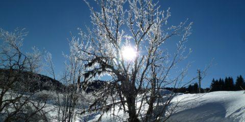 Soleil dans les branches d'un arbre givré